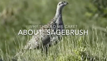 Why care about sagebrush?